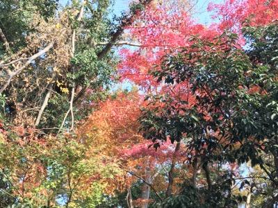 紅葉 興福寺