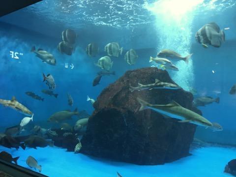 長崎ペンギン水族館 長崎の海水槽