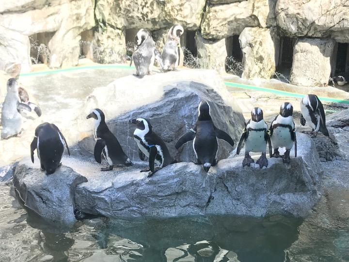長崎ペンギン水族館 温帯ペンギン