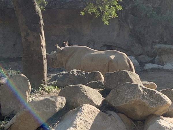 天王寺動物園 ヒガシクロサイ