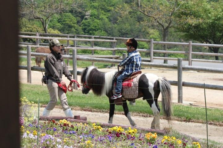 姫路セントラルパーク乗馬体験